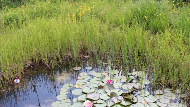 Blumenwiese und Seerosenteich